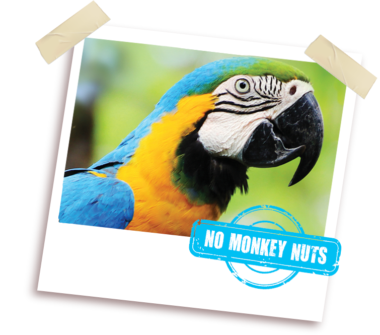 African grey clipart turkey picture royalty free stock Marriage's - Quality Pet Foods and Animal Feeds picture royalty free stock