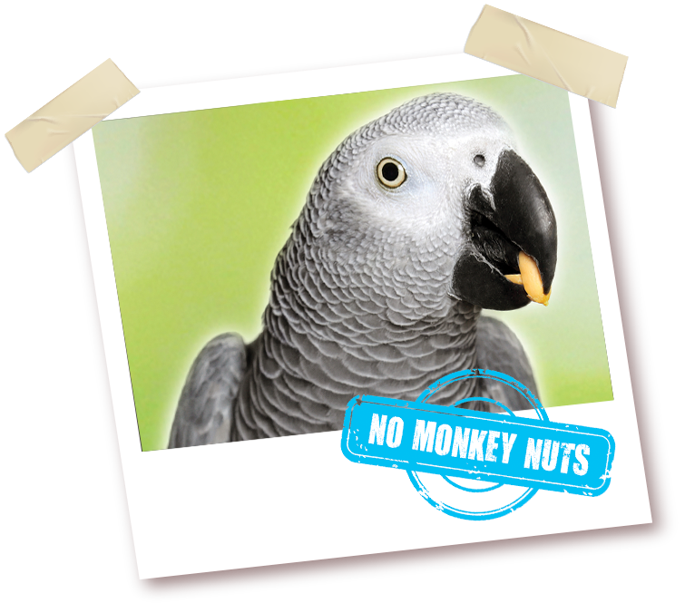African grey clipart turkey clip art freeuse download Marriage's - Quality Pet Foods and Animal Feeds clip art freeuse download