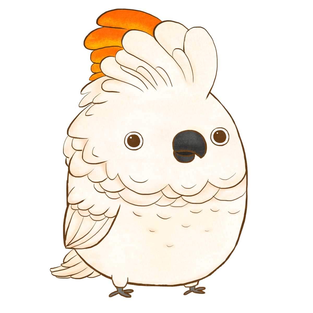 African grey clipart turkey png freeuse The Chubbies Collection – Pickles the Cockatoo png freeuse