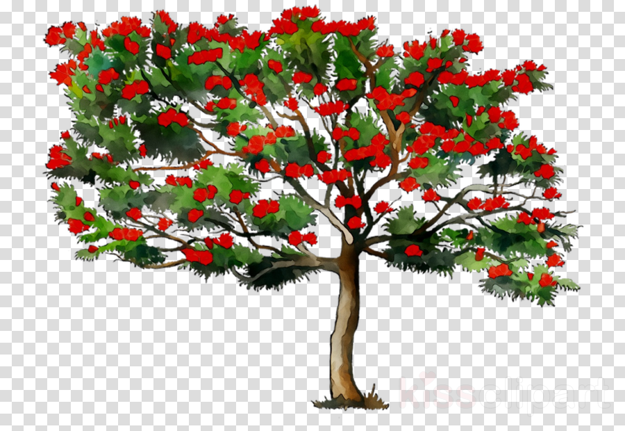 African plants clipart picture stock African Tree clipart - Tree, Plants, Flower, transparent clip art picture stock