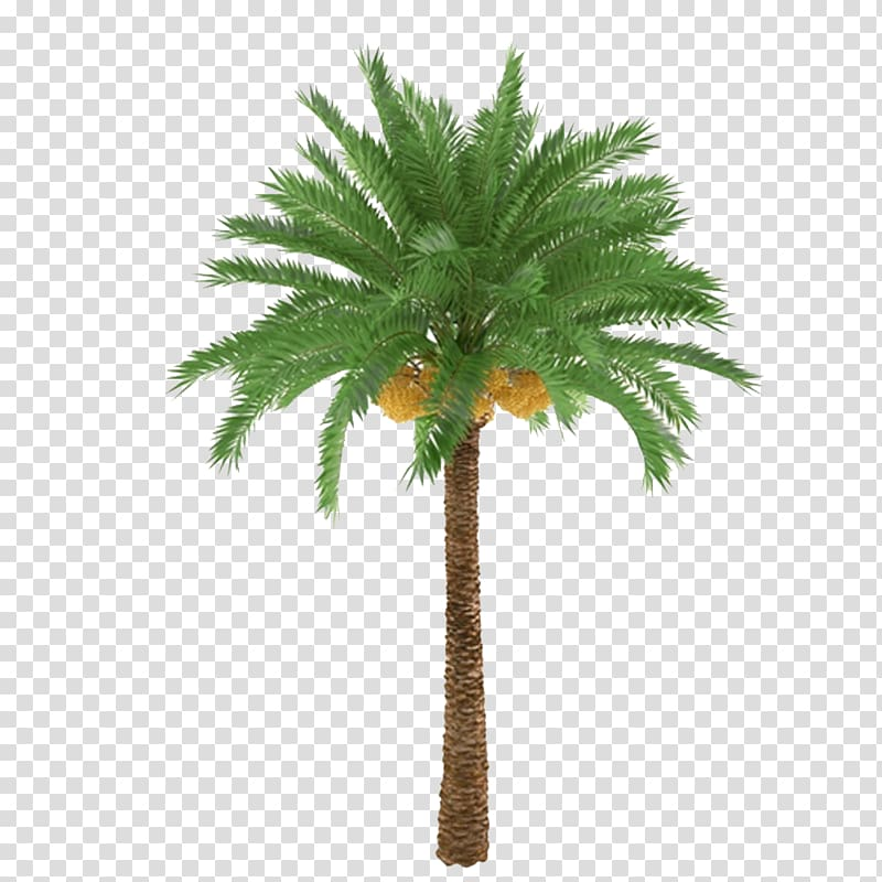 African plants clipart jpg free African oil palm Arecaceae Tree Trunk Plant, Palm trees and ... jpg free