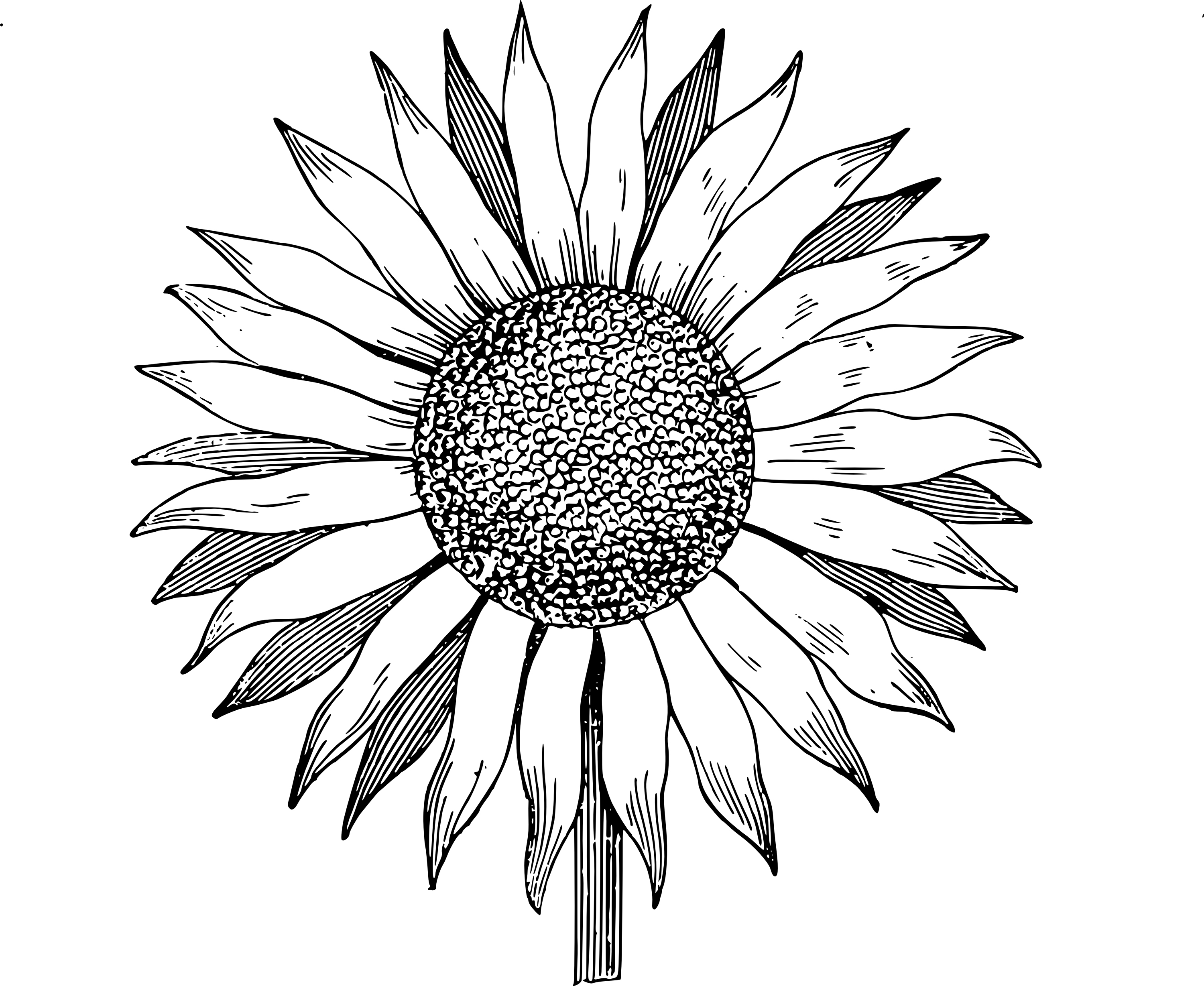 Black and white clipart sunflowers in a jar