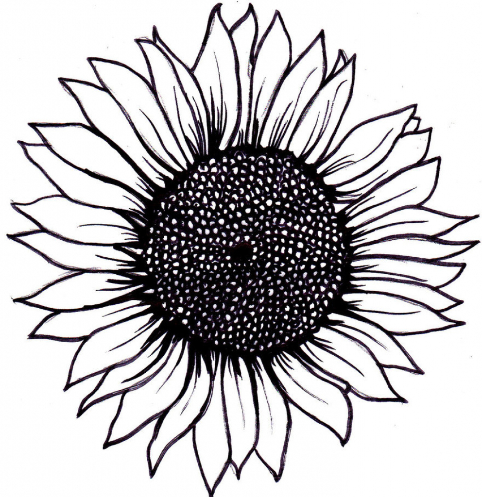 African sunflowers clipart image black and white download Sunflower Black And White Drawing at PaintingValley.com | Explore ... image black and white download