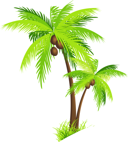 Hawaiian palm tree clipart picture stock Palm Tree with Coconuts PNG Clipart Picture | Trees , Tree Houses ... picture stock