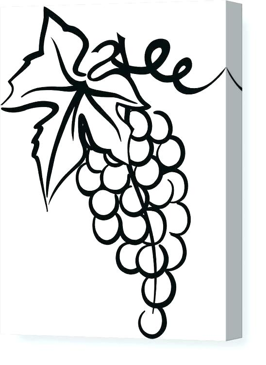 Agrape vines q clipart black and white svg library stock drawing of a vine – februarystakes.info svg library stock