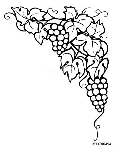 Agrape vines q clipart black and white jpg library download drawing vines and leaves – thefrangipanitree.com jpg library download