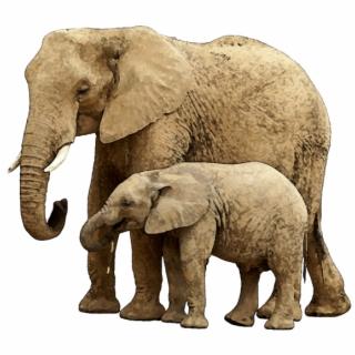 Airavata clipart cute clip art transparent Free Elephant PNG Images & Cliparts - Pngtube clip art transparent