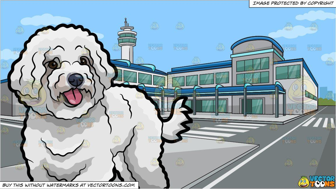 Airport clipart with pets image black and white library A Cute Bichon Frise Pet Dog Wagging Its Tail and Outside An Airport ... image black and white library