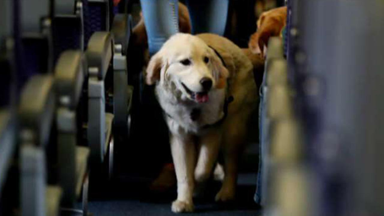 Airport clipart with pets png library Most controversial emotional support animal stories of 2018 | Fox News png library