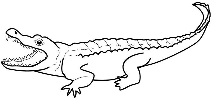Albino aligator clipart jpg black and white stock Free Gator Clipart Black And White, Download Free Clip Art, Free ... jpg black and white stock