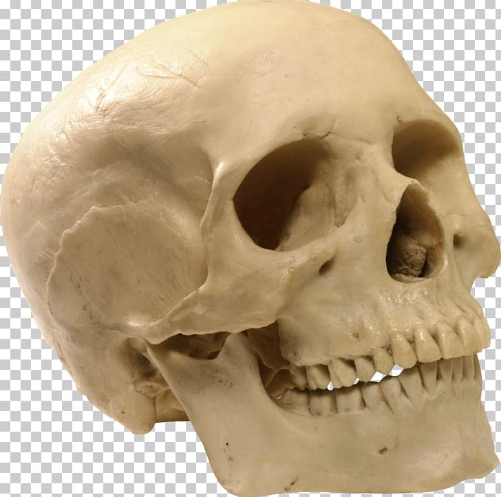 Alcohol and skelaton clipart clip freeuse library Skull Computer File PNG, Clipart, Alcohol, Beautiful, Beer, Bone ... clip freeuse library
