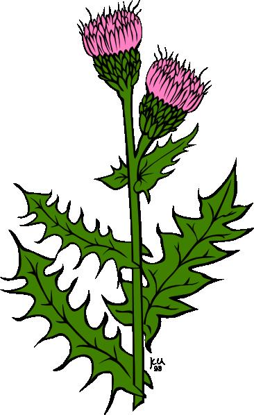 Alfalfa plant clipart jpg royalty free library Free Alfalfa Cliparts, Download Free Clip Art, Free Clip Art on ... jpg royalty free library