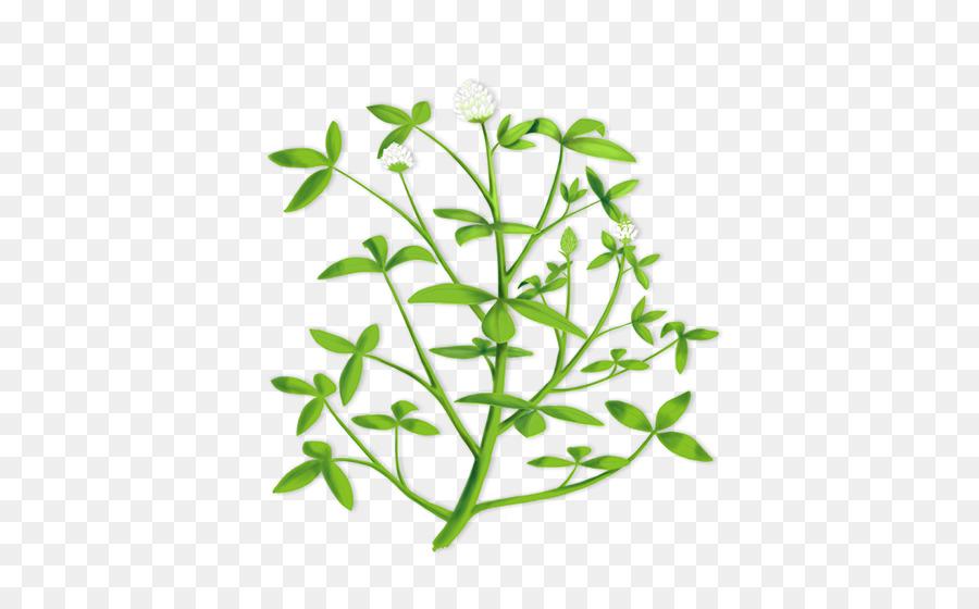 Alfalfa plant clipart clip free download Leaf Branch png download - 458*554 - Free Transparent Alfalfa png ... clip free download