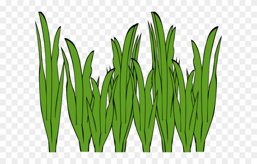 Algae images clipart picture library library Image Library Algae Clipart - Seaweed Clipart Png Transparent Png ... picture library library