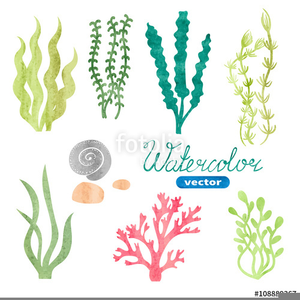 Algae images clipart graphic free download Algae Clipart Free | Free Images at Clker.com - vector clip art ... graphic free download
