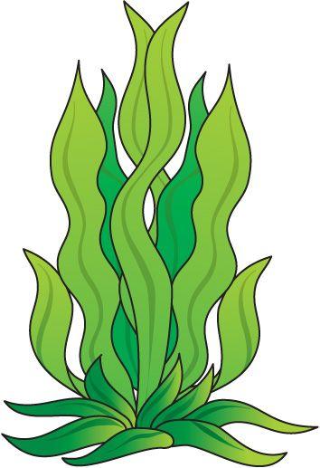 Algas marinas clipart graphic Pin by Jocelyn Dial on 2015 theme | Dibujos, Algas marinas dibujo ... graphic