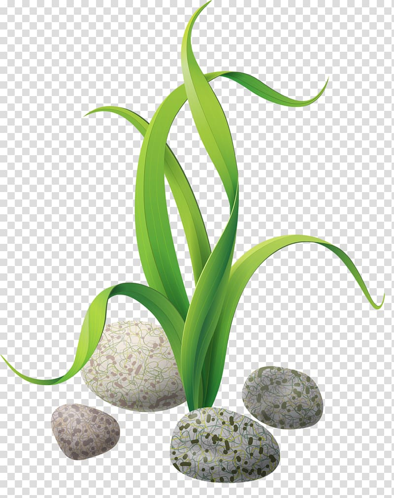 Algea clipart picture download Green leafed plant graphic, Algae Seaweed , stones and rocks ... picture download