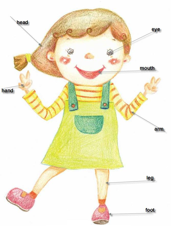 All about me clipart preschool svg free stock Free My Body Parts, Download Free Clip Art, Free Clip Art on Clipart ... svg free stock
