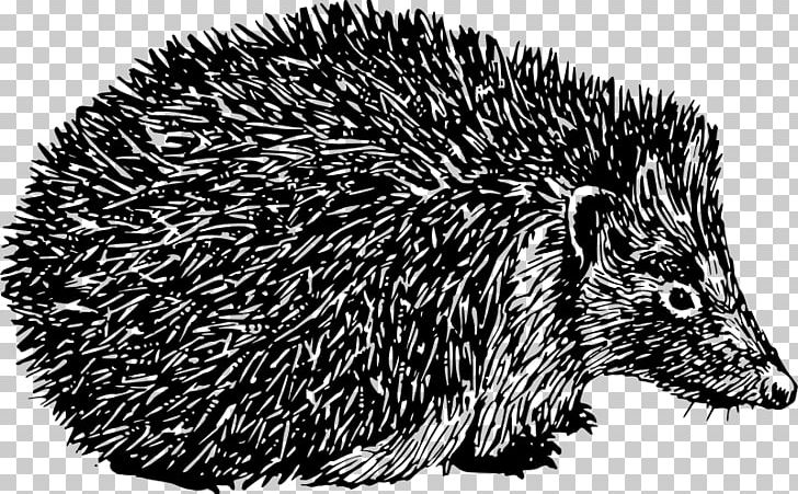 All black clipart hedgehog freeuse library Domesticated Hedgehog Porcupine Spine PNG, Clipart, Animal, Animals ... freeuse library