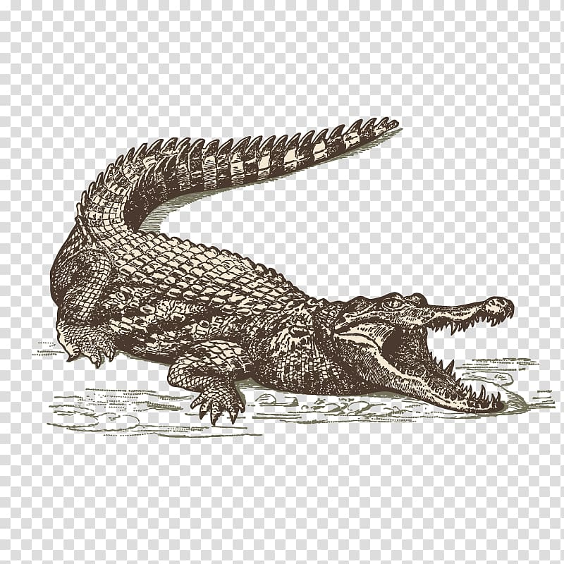Alligator in the everglades clipart banner transparent library International Drive Orlando Crocodile Everglades Restaurant, Sketch ... banner transparent library