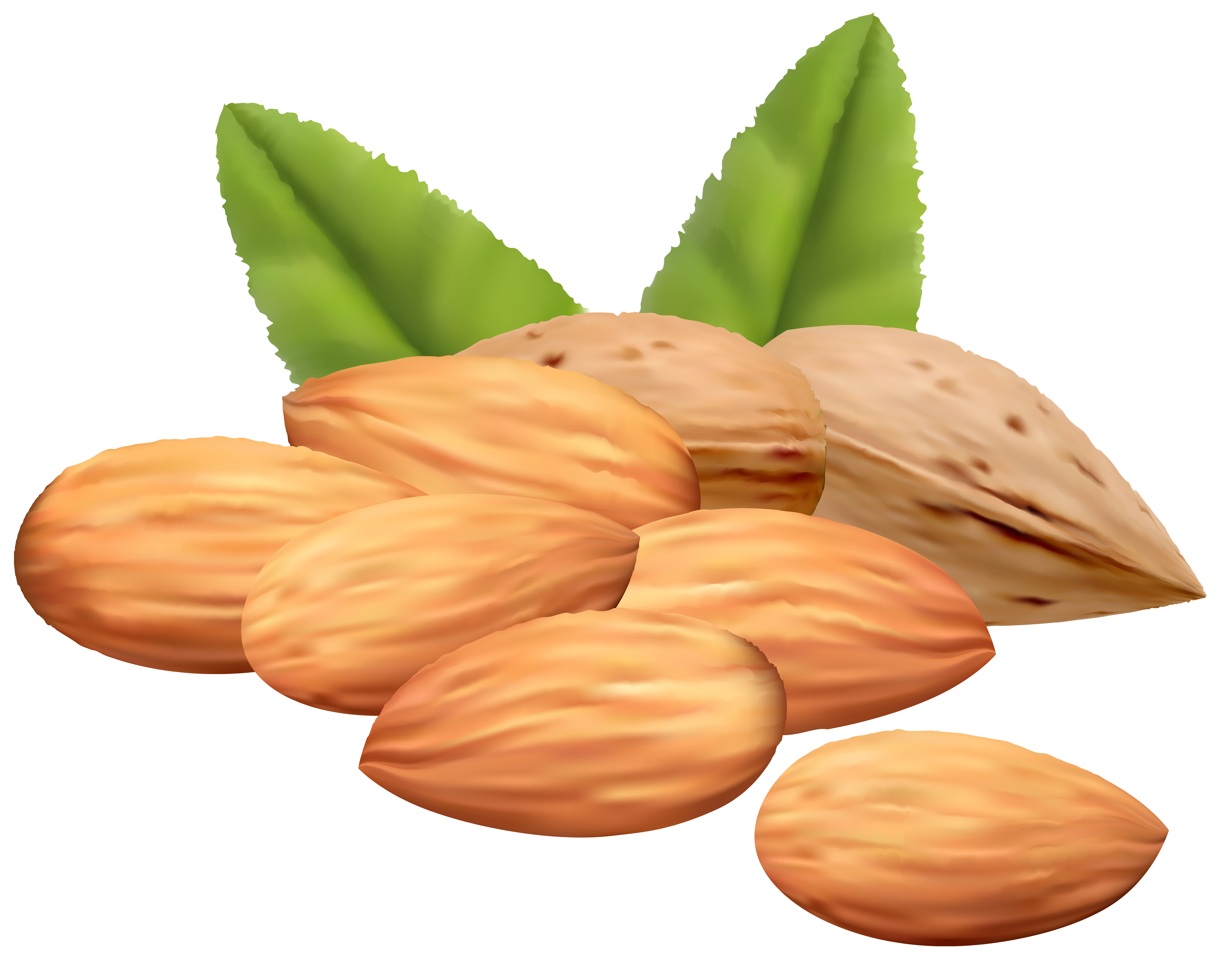 Almond oil clipart