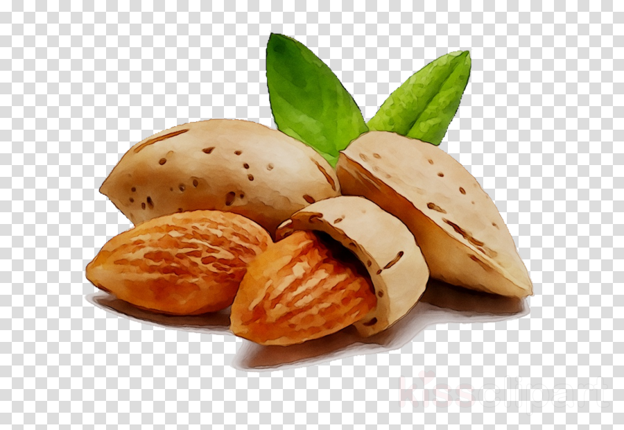 Almond oil clipart clipart black and white download Oil Background clipart - Food, Product, Plant, transparent clip art clipart black and white download