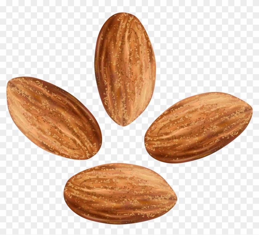 Almondt clipart svg transparent Almonds Transparent Clip Art Image - Almond Nuts Png, Png Download ... svg transparent