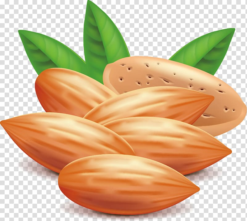 Almondt clipart picture royalty free Almond Nut Euclidean , almond transparent background PNG clipart ... picture royalty free
