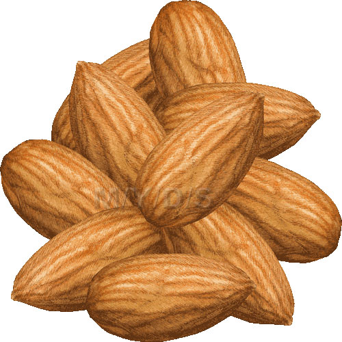 Almondt clipart download Free Cartoon Almond Cliparts, Download Free Clip Art, Free Clip Art ... download