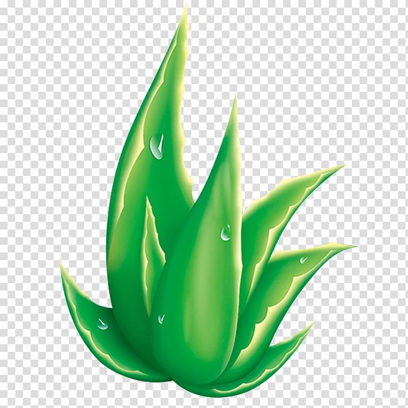 Aloe striata clipart svg library Aloe striata Raster graphics, Aloe transparent background PNG ... svg library