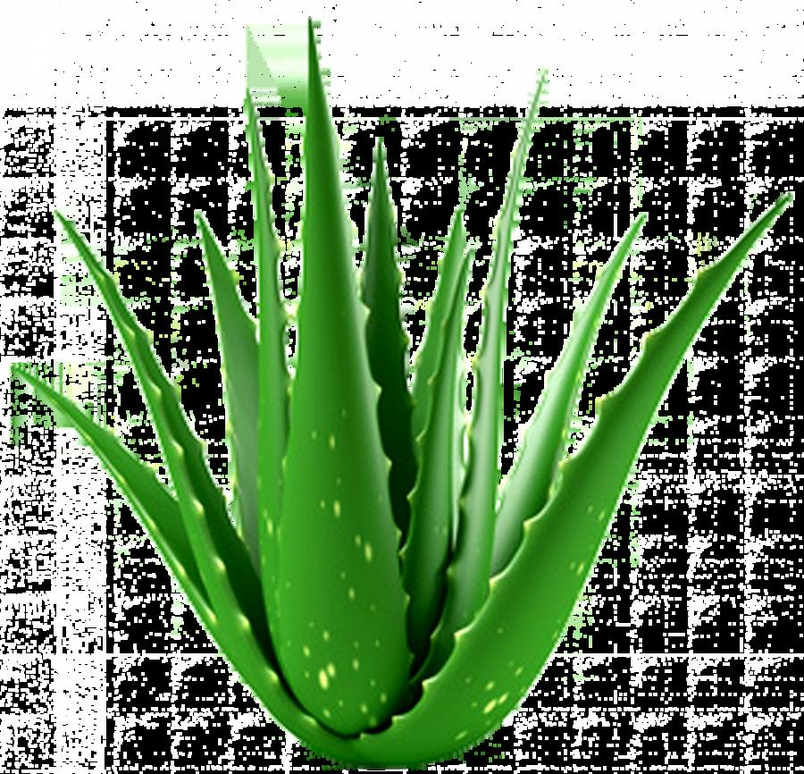Clipart aloe vera svg black and white download Aloe Vera Leaf clipart - Plants, Plant, Grass, transparent clip art svg black and white download