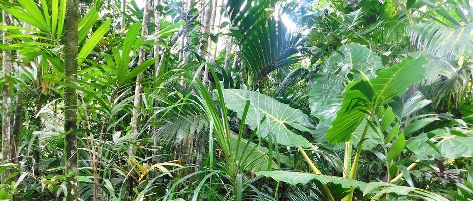 Alotau clipart weather forecast clipart black and white Alotau Tours - Cultural Tours in Papua New Guinea clipart black and white