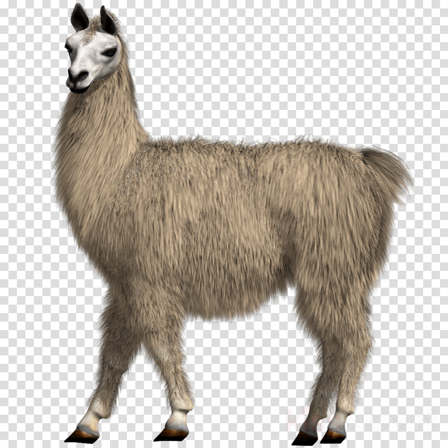 Llama head clipart with out background graphic download Llama Cartoon clipart - Drawing, Illustration, Goats, transparent ... graphic download