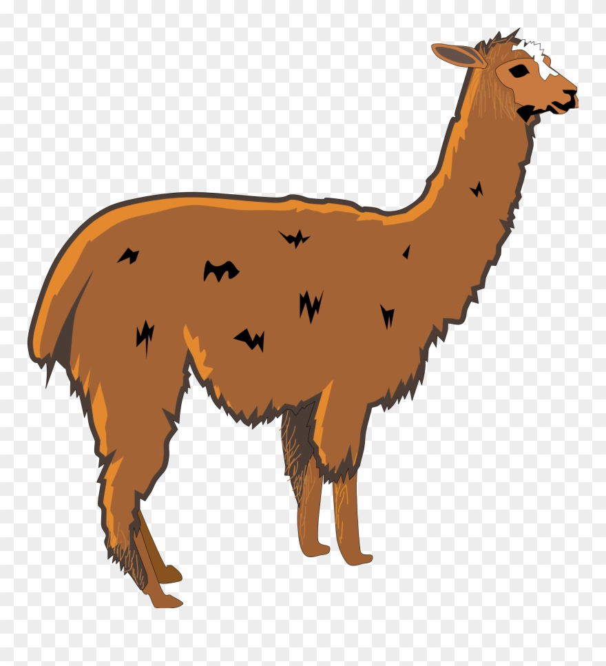 Llama head clipart with out background clip freeuse library Alpaca clipart transparent Circle Png, Vector, PSD, and Clipart With ... clip freeuse library