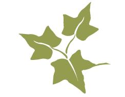 Alpha phi ivy leaf clip art. History stanford the symbol