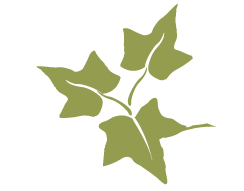 Alpha phi ivy leaf clip art svg free stock History — Stanford Alpha Phi svg free stock