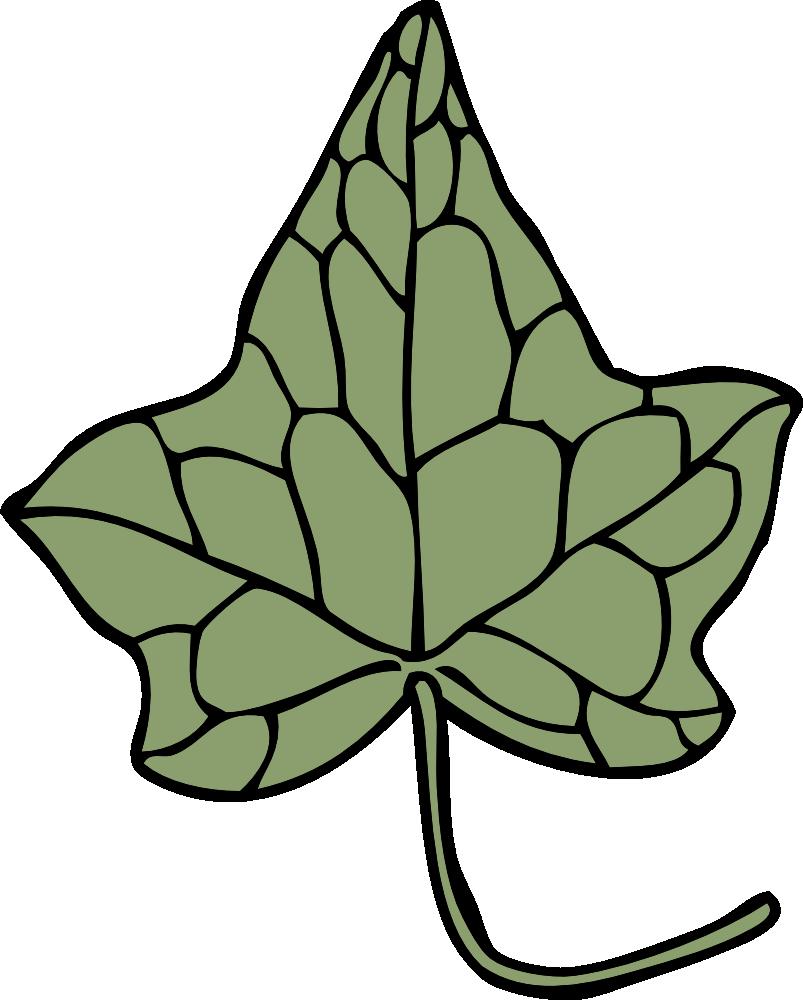 Alpha phi ivy leaf clip art. Presentation name on emaze