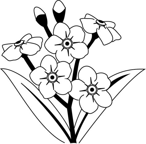 Alpine forget me not clipart outline black and white