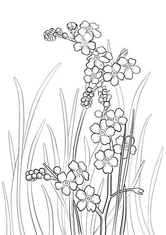 Alpine forget me not clipart outline black and white image download Alpine Forget Me Not Coloring page | Free Printable Coloring Pages ... image download