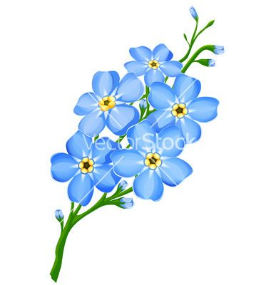 Alpine forget me not clipart outline black and white image freeuse library Forget Me Not Flower Drawings | Forget me not flowers vector | tatoo ... image freeuse library