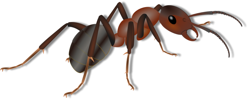 Ameise clipart clip art royalty free library Free Clipart: Ant - Ameise | Mogwai clip art royalty free library