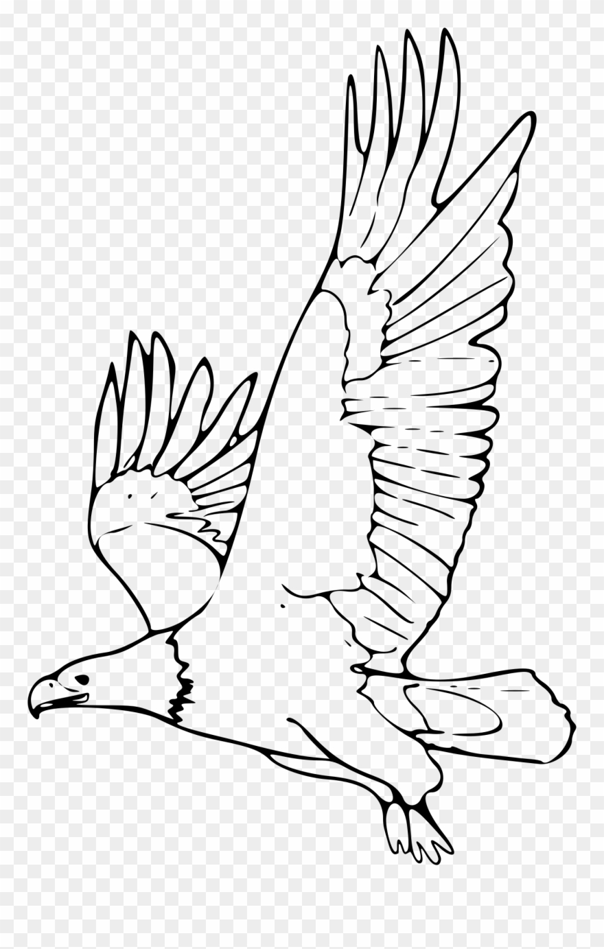 American bald eagle clipart black and white vector royalty free stock Bald Eagle Clipart - Outline Picture Of Eagle - Png Download ... vector royalty free stock