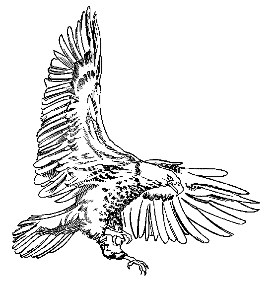 American bald eagle clipart black and white jpg free stock Free American Eagle Clipart, Download Free Clip Art, Free Clip Art ... jpg free stock