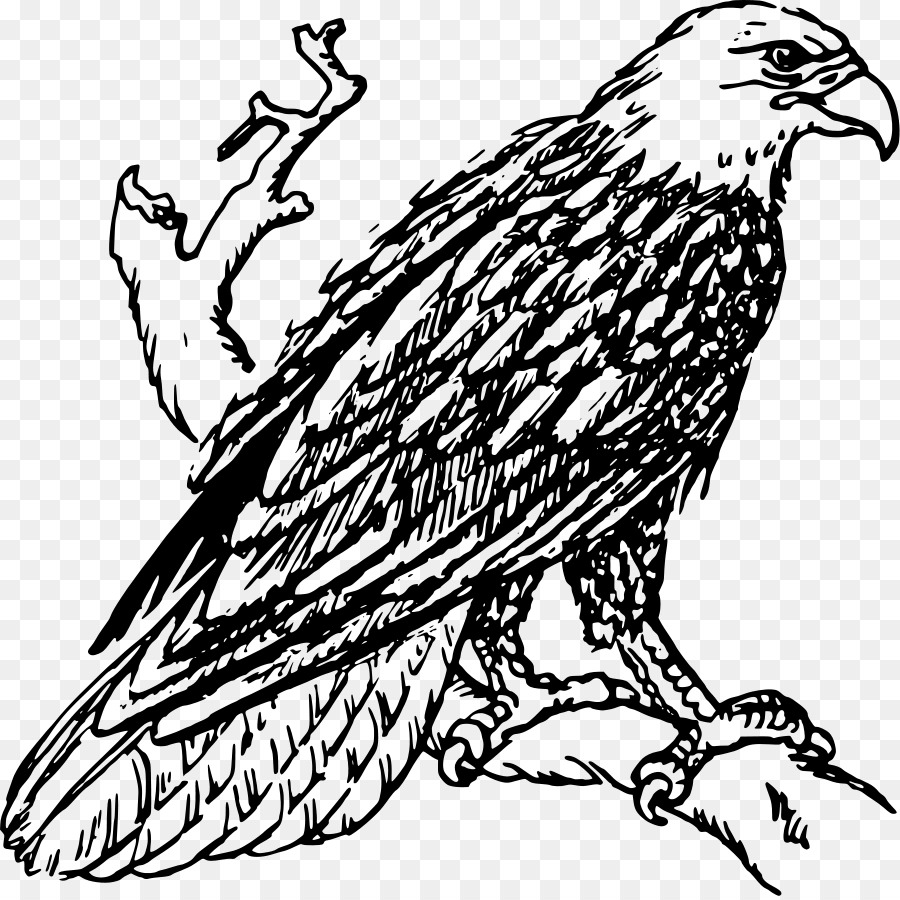 American bald eagle clipart black and white svg library Book Black And White png download - 900*896 - Free Transparent Bald ... svg library