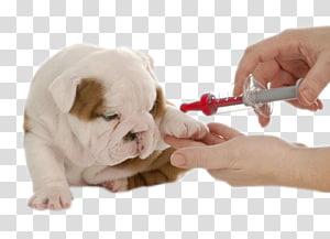 American bully clipart vaccine vector library library French Bulldog , Bulldog transparent background PNG clipart | PNGGuru vector library library