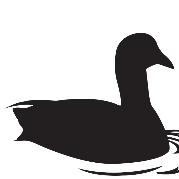 American coot clipart clipart freeuse download American Coot Clipart Transparent Png Images Vector, Clipart, PSD ... clipart freeuse download