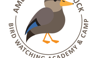 American coot clipart picture free download American Coot - Bird Watching Academy picture free download