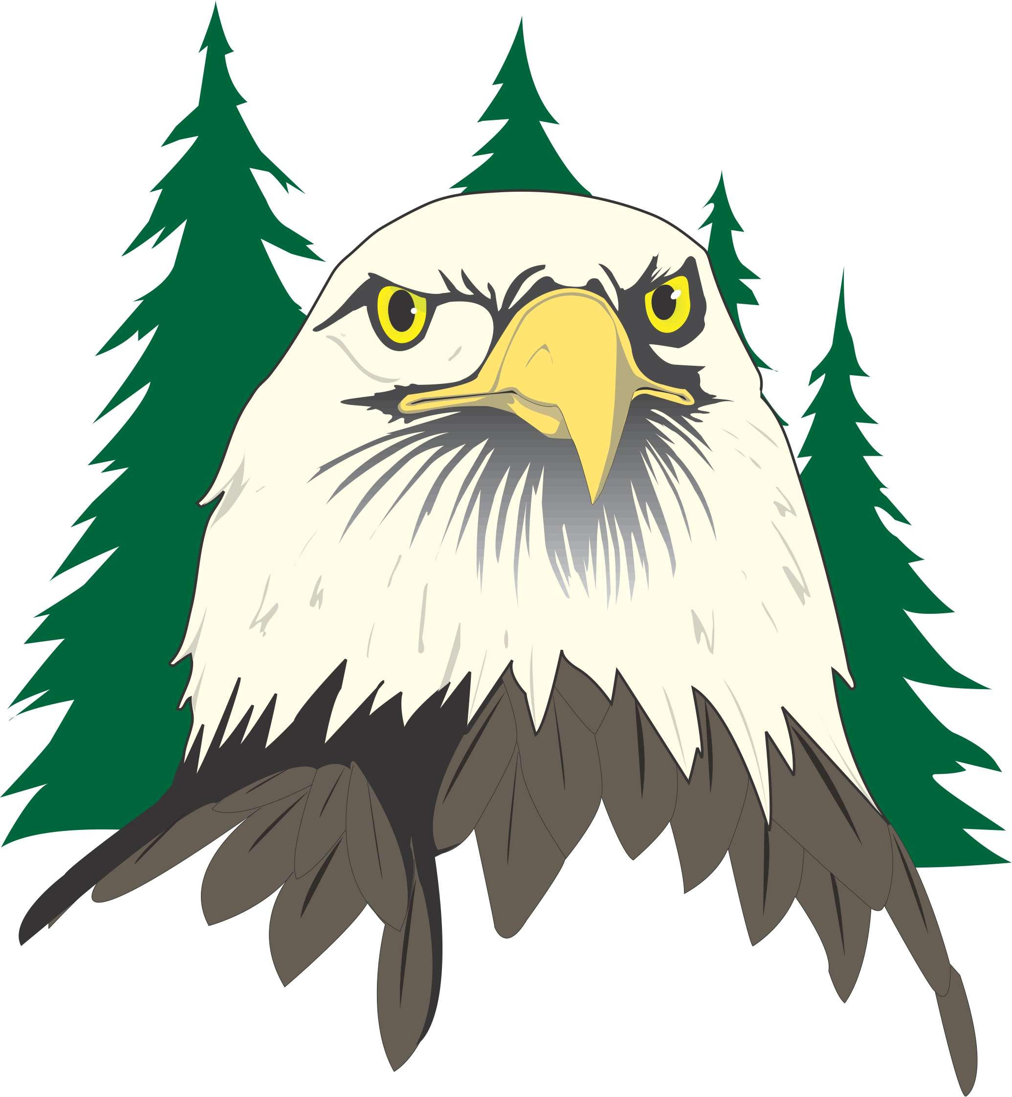 Bald eagle head and foot clipart images