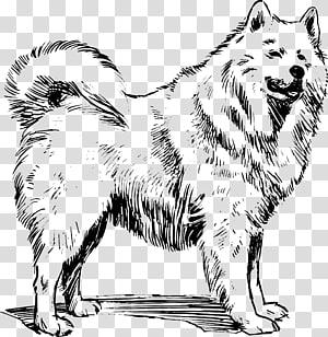 American eskimo dog clipart translucent jpg royalty free download American Eskimo Dog transparent background PNG cliparts free ... jpg royalty free download