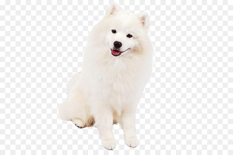 American eskimo dog clipart translucent clip art freeuse library Dog Cartoon clipart - Dog, White, transparent clip art clip art freeuse library